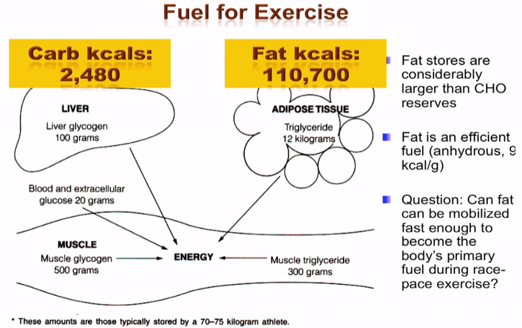 fat v carbs for fuelling